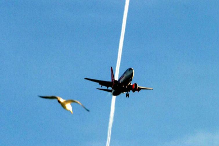 Foto av fugl og fly
