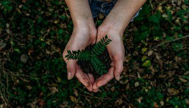 Hender og plante